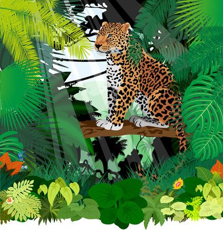 Jaguar, Leopard in Jungle Rainforest