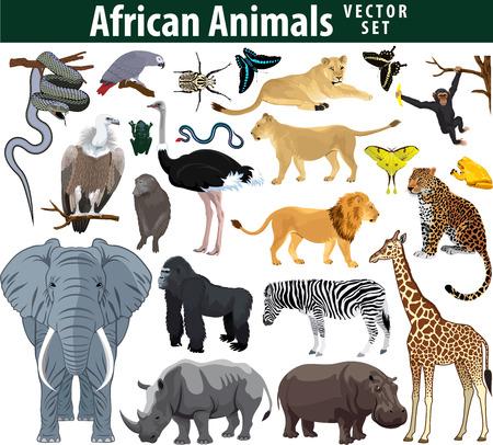 Wild african animals set with zebra ostrich lion rhinoceros hippo snake leopard vulture parrot gorilla butterflies giraffe frog isolated illustration