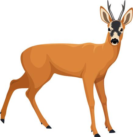 vector Roe deer