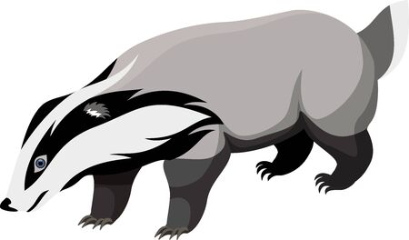 badger: vector European badger