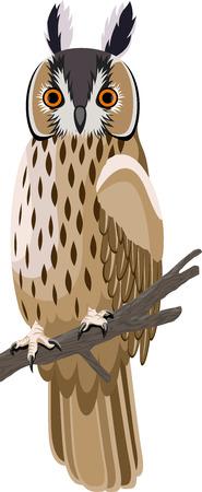 feathering: Long-eared owl