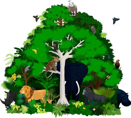 African vector jungle illustration. Vector Green Tropical Forest with animals