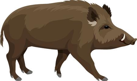 ベクトル野生の豚イノシシ マスコット