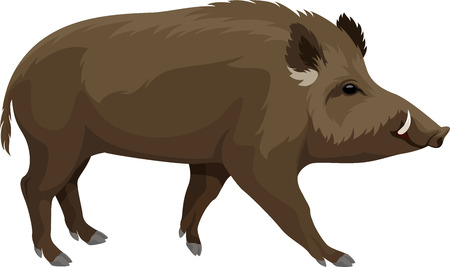 vector wilde zwijnen hog mascotte