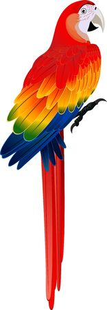 macaw: vector red Macaw ara parrot