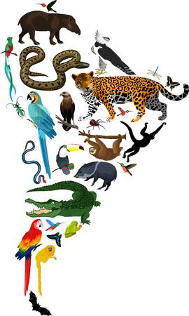animals South America - vector illustration Illustration