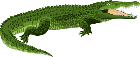 vector Wildlife crocodile Illustration