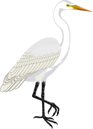 vector Great white heron