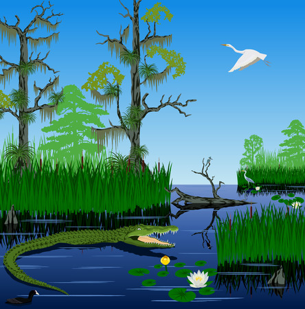 vector wetland Pantanal Florida Everglades landscape Illustration