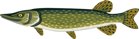 vector Pike fish