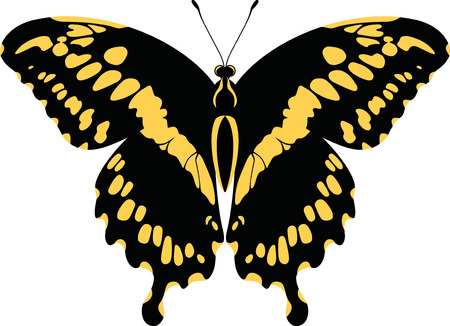 Dorsal view of vector Giant Swallowtail Butterfly (Papilio Cresphontes)
