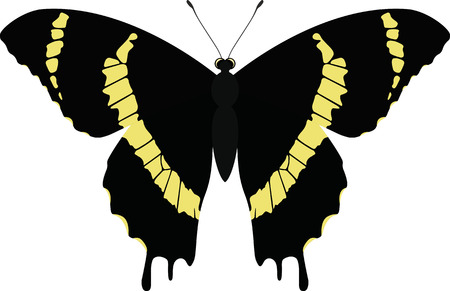 Vector butterfly isolated on white. Papilio garamas abderus