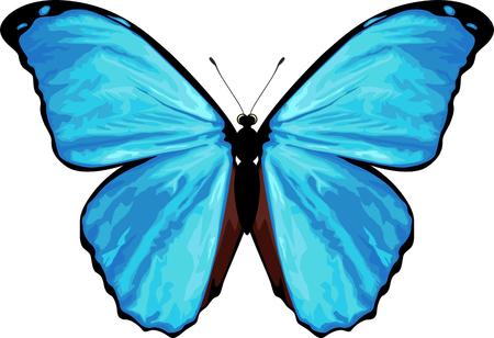 vector tropical butterfly Morpho menelaus