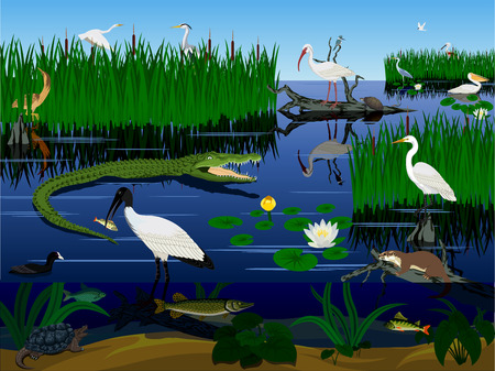 vector wetland Pantanal Florida Everglades landscape with animals