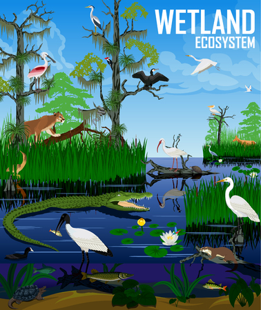 Vector wetland ecosystem illustration. Pantanal Florida Everglades landscape with animals. Illustration