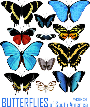 vector set of butterflies of south America isolated on white.