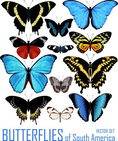 vector set vlinders van Zuid-Amerika geïsoleerd op wit.