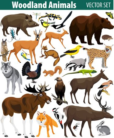 Set of vector woodland forest animals isolated on white background.