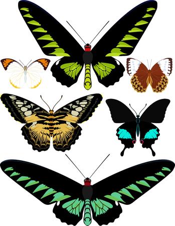 vector set of butterflies of Asia Illustration