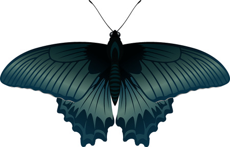 vector tropical butterfly Great Mormon Papilio rumanzovia Illustration