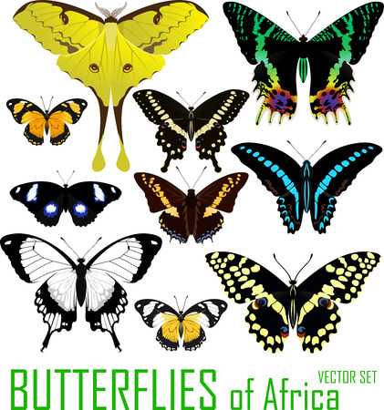 vector set of butterflies of Africa isolated on white.