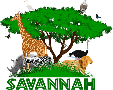 vector african savannah with lions, rhino, girrafe, vulture, zebra, ostrich and heron Illustration