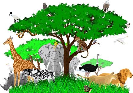 African savannah with lions, rhino, girrafe, vulture, zebra, boa, leopard, ostrich and heron Vettoriali