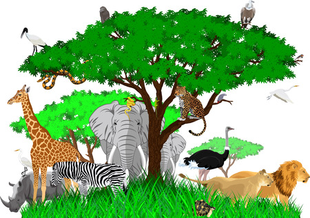 African savannah with lions, rhino, girrafe, vulture, zebra, boa, leopard, ostrich and heron Illustration
