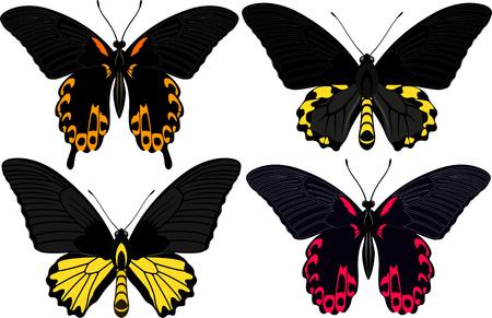 vector set of Philippines butterflies
