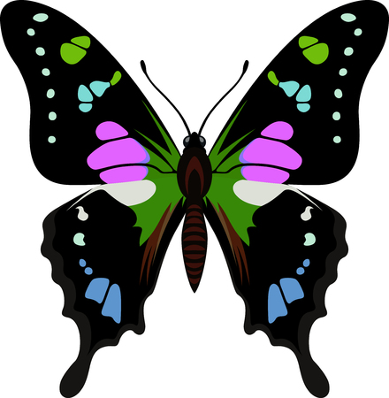 vector Purple spotted swallowtail butterfly from New Guinea (Graphium weiskei)