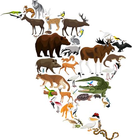 動物北アメリカ - ベクトル図  イラスト・ベクター素材