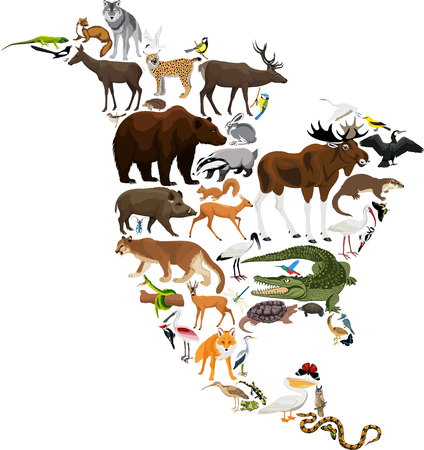 Animals North America - vector illustration Çizim