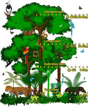 熱帯雨林ジャングルのレイヤーはベクトル イラストです。 ベクトルの異なる動物と緑の熱帯雨林ジャングル。
