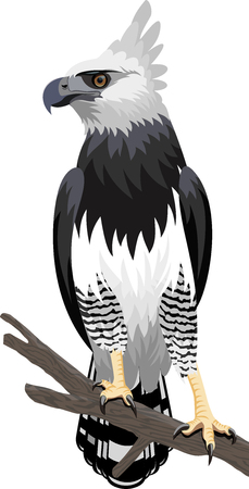 Harpy Eagle in the rainforest jungle in Brazil.