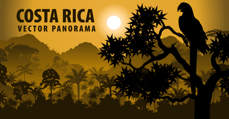 vector panorama of Costa rica with jungle raimforest withara makaw parrot