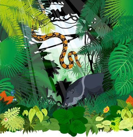 vector peccary and Boa python in Jungle Rainforest