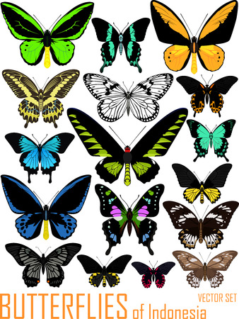 vector set of butterflies of Indonesia isolated on white Illustration