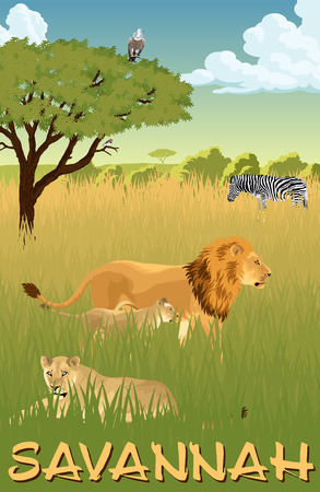 African savannah with lions and zebra - vector illustration Illustration