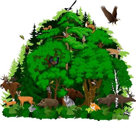 Vector noord bos bos met dieren Stock Illustratie