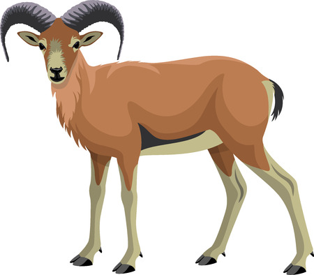 vector Goat Urial