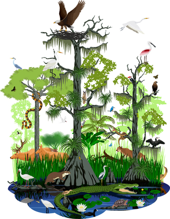Vector wetland or Florida Everglades landscape with different wetland animals Illustration