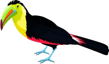 Vector rainbow-billed toucan Illustration