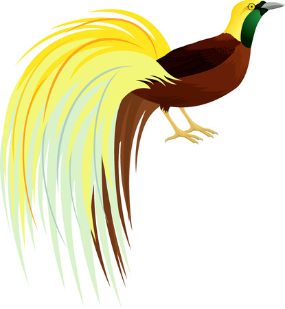 Vector Lesser Bird of Paradise or Paradisaea minor. Beautiful bird of Papua New Guinea.