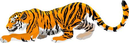 sumatran: Vector angry tiger mascot illustration