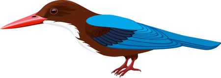 Vector white-throated kingfisher Illustration