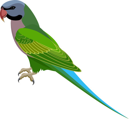 Vector Red-Breasted Parakeet parrot Ilustrace