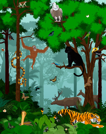Vector indian jungle rainforest illustration with animals