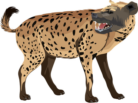 watchful: Vector spotted hyena illustration