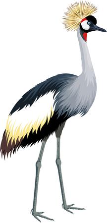 Vector crowned crane Illustration