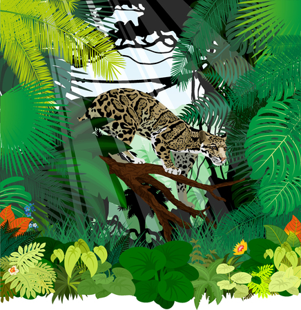 Vector clouded leopard (neofelis nebulosa) in jungle rainforest Illustration
